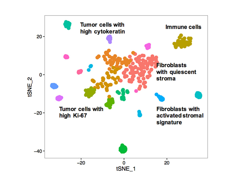 Graphic showing representative t-SNE plot of single-cell RNA sequencing data
