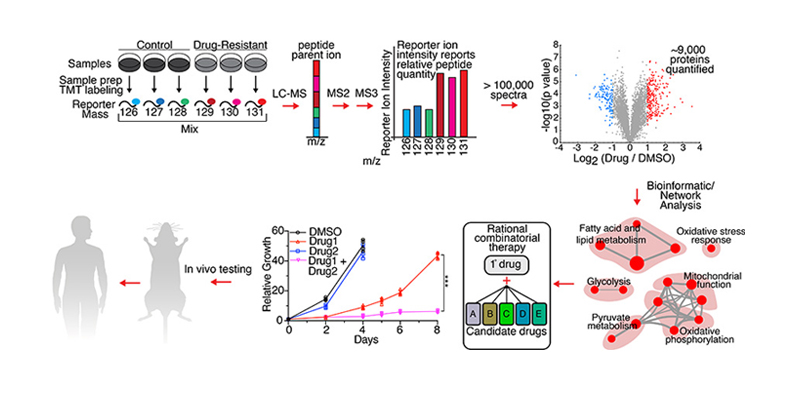 Graphic showing Therapeutic Resistance Quantitative Proteomic workflow